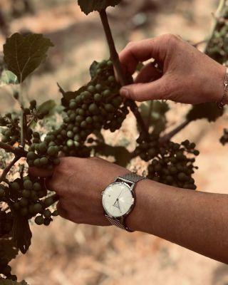 Wer genießen kann, trinkt keinen Wein mehr, sondern kostet Geheimnisse 🍷  Wir finden das klassische Design der Stuttgart I Small macht sich sehr gut in den Weinbergen - und noch besser an einem zierlichen Handgelenk, wie das von Juliane Eller. #BrunoSöhnle - #Geheimnisse #Genuss #Kosten #Wein #Klassisch #Design #Winzerin #Lieblingsstück #Uhrenliebe #Glashütte #MadeInGermany #Rondamovement #MeineBesteZeit